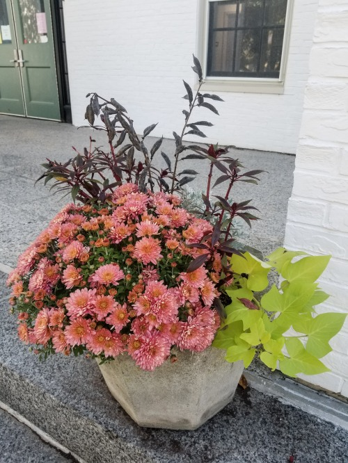 Town Hall Planters